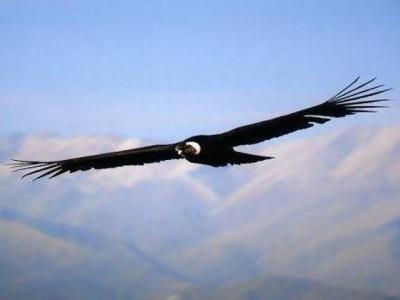 بالصور صور طيور , صورة للطير 5907 8
