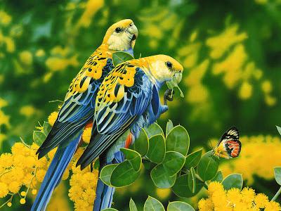 بالصور صور طيور , صورة للطير 5907 9