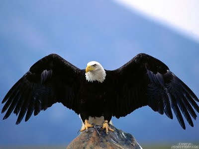 صور صور طيور , صورة للطير