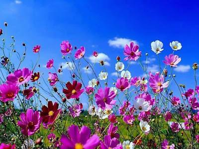 صور اجمل صور الطبيعة , صور جميلة جدا للطبيعة