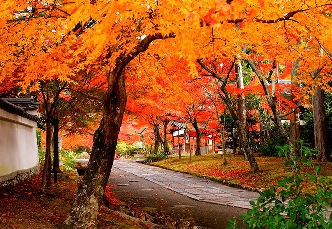 بالصور اجمل صور الطبيعة , صور جميلة جدا للطبيعة 5961 3