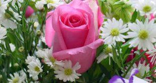 اجمل وردة في العالم , صور لاحلى وردة بالعالم