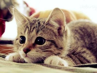 بالصور حيوانات اليفة , صور لاجمل حيوانات اليفة 5975 1