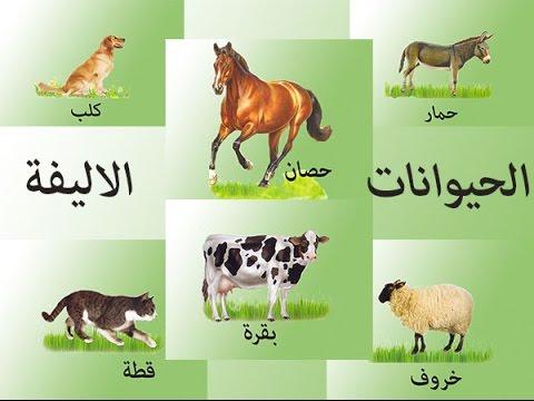 بالصور حيوانات اليفة , صور لاجمل حيوانات اليفة 5975 5