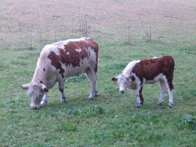 بالصور حيوانات اليفة , صور لاجمل حيوانات اليفة 5975 8