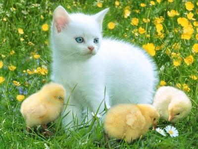 بالصور حيوانات اليفة , صور لاجمل حيوانات اليفة 5975 9