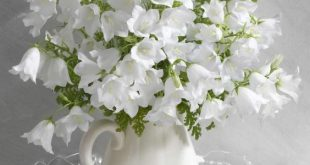 صور صور زهور , اجمل وارق الزهور