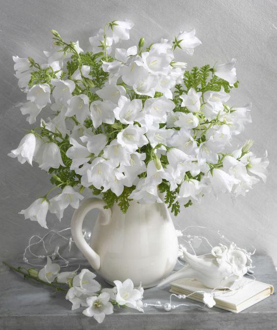صورة صور زهور , اجمل وارق الزهور