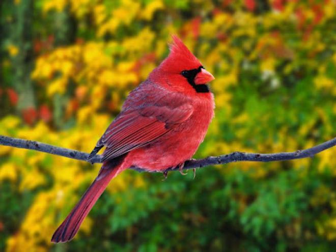 صور اجمل الطيور في العالم , احلى وارق الطيور