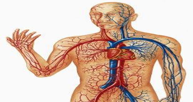 صورة صور جسم الانسان , جسم الانسان من اكبر معجزات الله