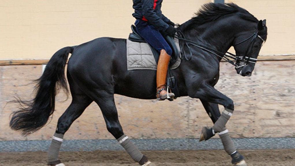صورة خيل اصيل , اجمل الخيول الاصيله 2457 3