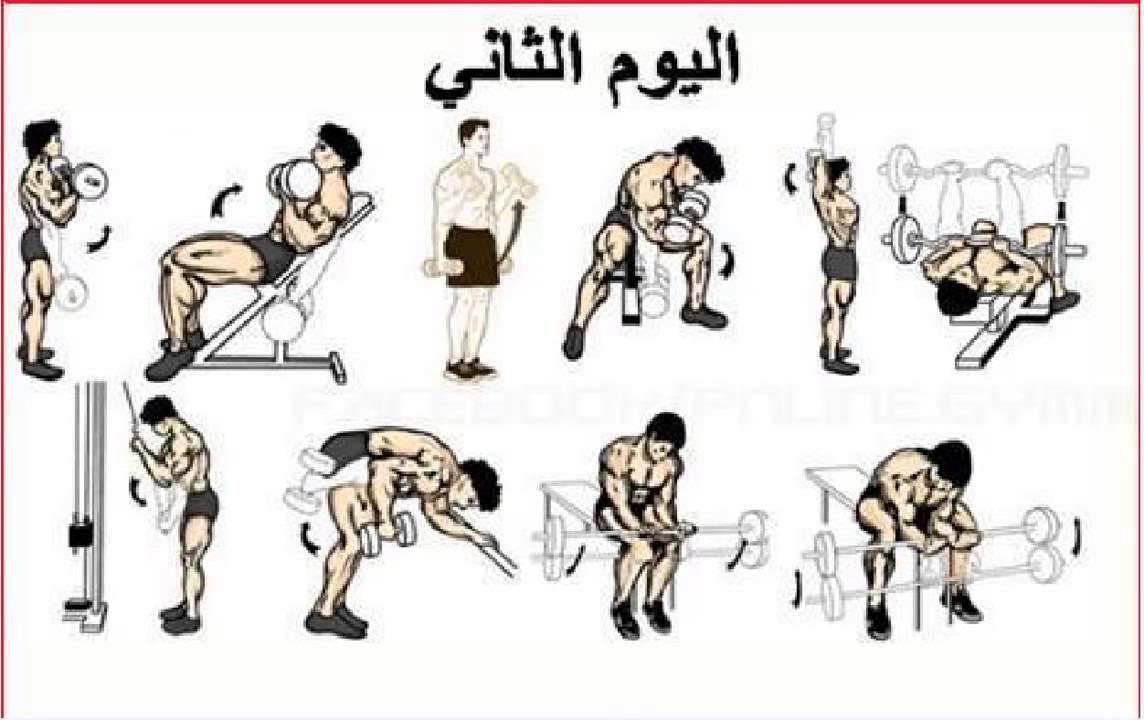 صور تمارين كمال اجسام , كيف تلعب تمارين كمال اجسام