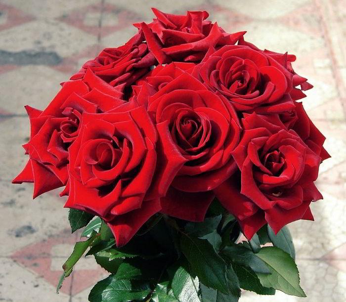 صور صور اجمل الورود , اجمل صور للورود