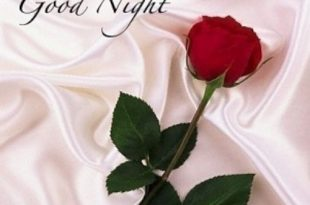 صورة مساء الورد شعر , احلى مساء مساء الورد