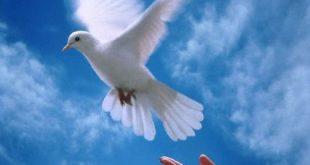 صورة صور عن السلام , صور جميلة معبرة عن السلام