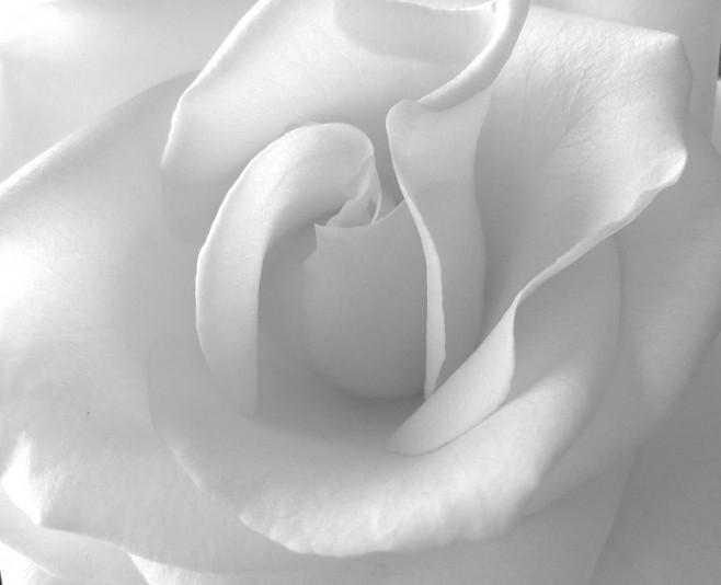 بالصور خلفية بيضاء ساده , اجمل خلفيات بيضاء 2761 10