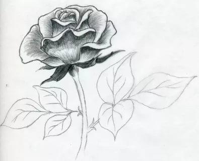 صورة رسومات جميله , اجمل اشكال الرسومات الطبيعية