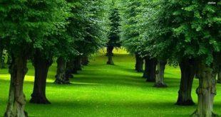 صور طبيعية , اجمل المناظر الطبيعية الرائعة