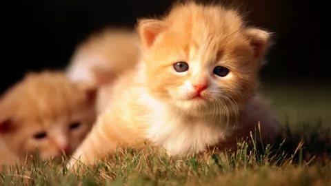 صور قطط وكلاب , اجمل صور القطط والكلاب