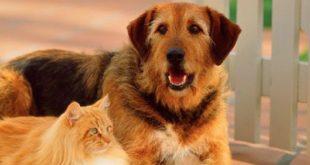 صوره قطط وكلاب , اجمل صور القطط والكلاب