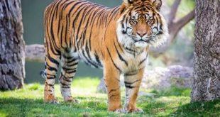 صورة معلومات عن الحيوانات , اطرف معلومات عن عالم الحيوانات