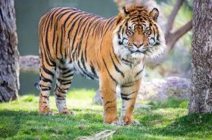 صور معلومات عن الحيوانات , اطرف معلومات عن عالم الحيوانات