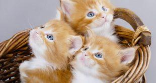 صوره صور قطط جميلة , قطة جميلة ولطيفة