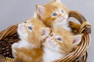 بالصور صور قطط جميلة , قطة جميلة ولطيفة 3255 11 310x205