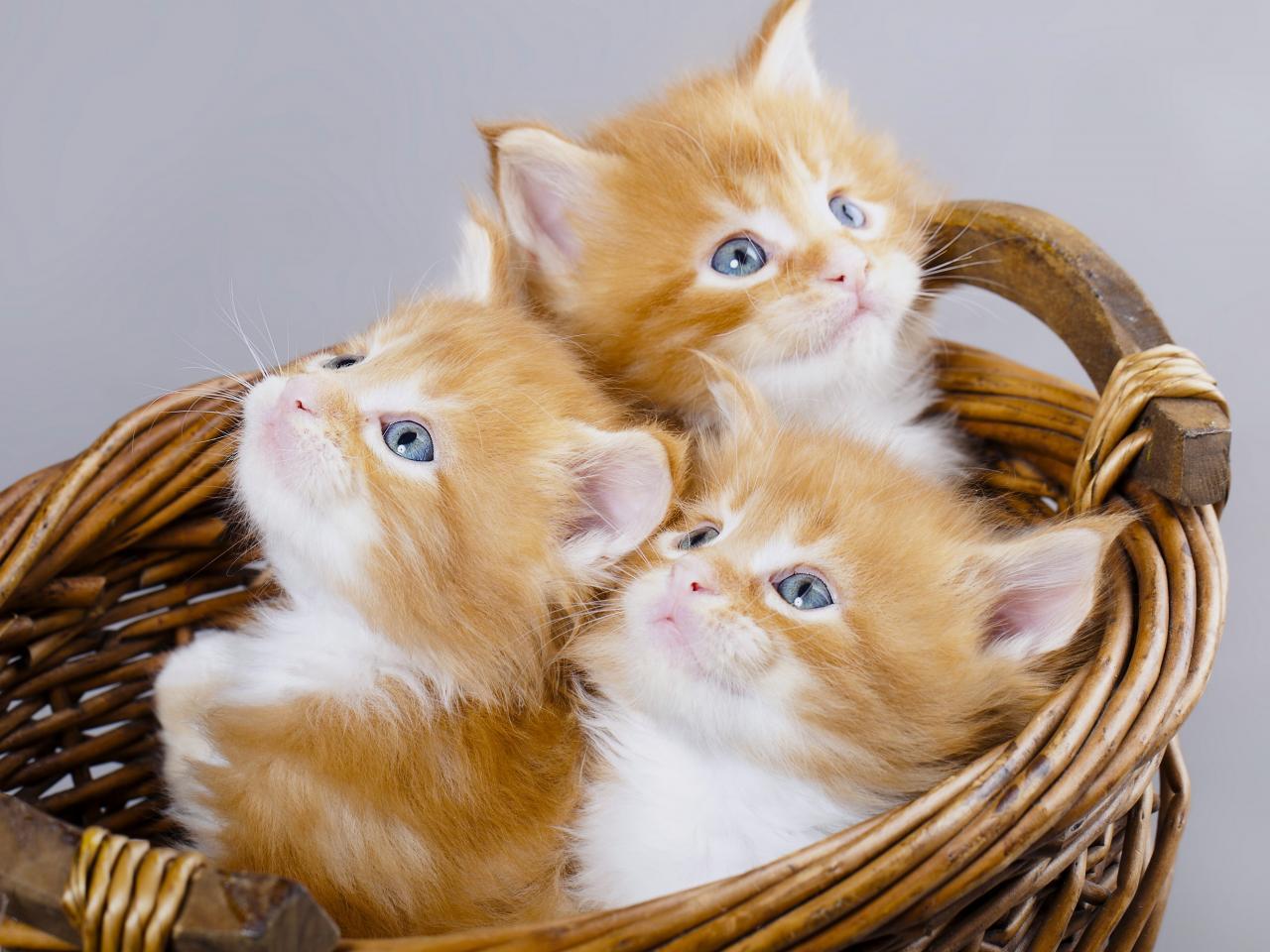 قطط اطفال كرتون