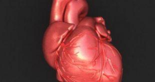صور صور قلب الانسان , خلفيات قلب الانسان