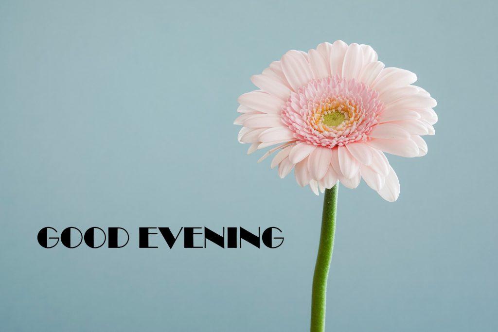 مساء الخير بالانجليزي مسائك خير باللغة الانجليزية دلع ورد