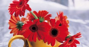 صورة زهور جميلة , ورود رائعه و جميله