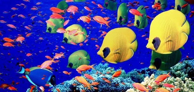 صورة معلومات عن الاسماك , اشهر المعلومات عن الاسماك