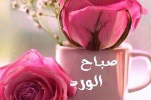صورة صباح الورد حبيبي , اجمل صباح الفل والياسمين