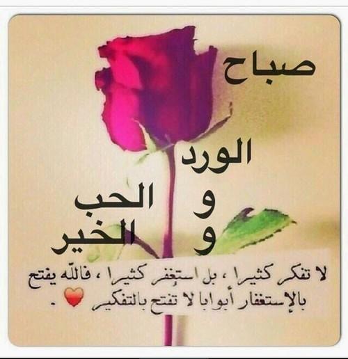 بالصور صباح الورد حبيبي , اجمل صباح الفل والياسمين 4025 2