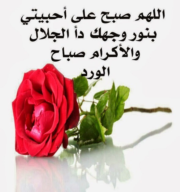 بالصور صباح الورد حبيبي , اجمل صباح الفل والياسمين 4025 6