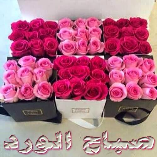 بالصور صباح الورد حبيبي , اجمل صباح الفل والياسمين 4025 8