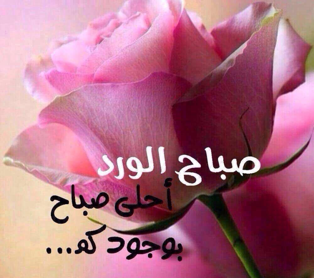 بالصور صباح الورد حبيبي , اجمل صباح الفل والياسمين 4025 9
