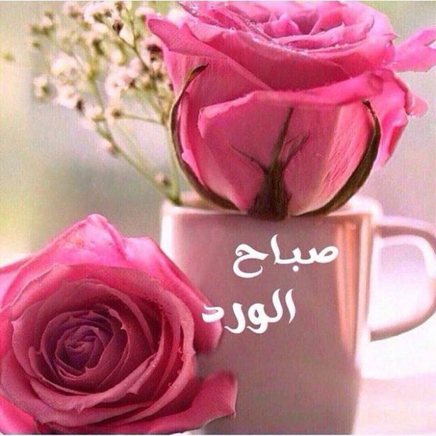 صور صباح الورد حبيبي , اجمل صباح الفل والياسمين