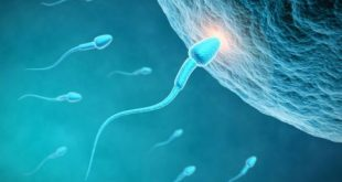 بالصور عند تلقيح البويضة ماذا تشعر المراة , اعراض حدوث الحمل عند تلقيح البويضه 4081 3 310x165