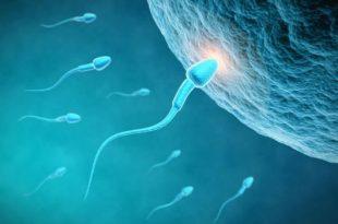 بالصور عند تلقيح البويضة ماذا تشعر المراة , اعراض حدوث الحمل عند تلقيح البويضه 4081 3 310x205