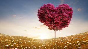 بالصور كلام عشق للحبيب , ما اجمل ان يقال في عشق الحبيب 4139 8