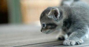 بالصور كيفية تربية القطط , اساليب وطرق لتربيه القطط وكيفيه التعامل معها 4190 2 310x165