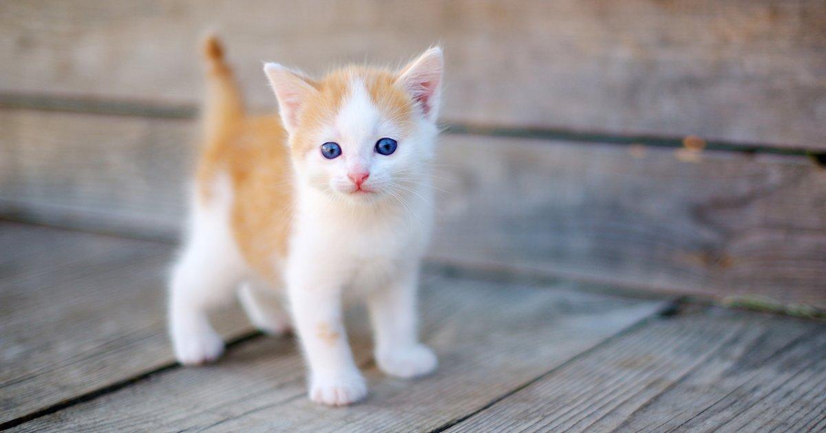 صورة كيفية تربية القطط , اساليب وطرق لتربيه القطط وكيفيه التعامل معها