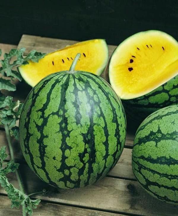 صورة بطيخ اصفر , فوائد البطيخ الاصفر