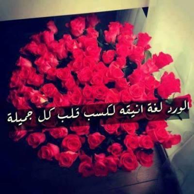 صوره كلمات عن الورد , اجمل الكلمات عن الورد