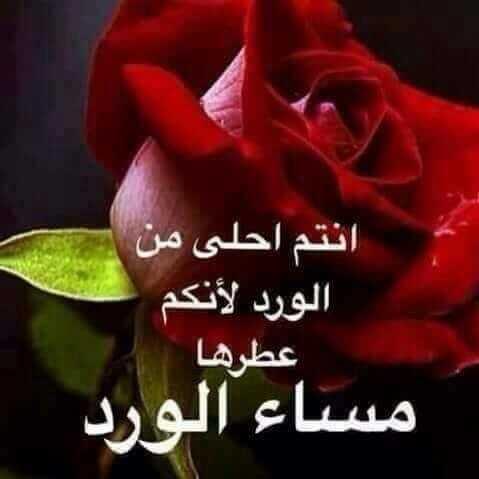 بالصور كلمات عن الورد , اجمل الكلمات عن الورد 4600 3