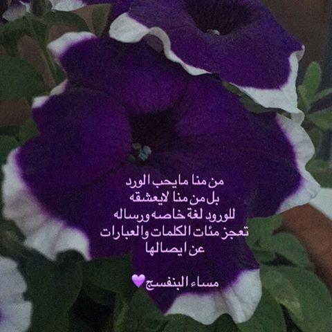 بالصور كلمات عن الورد , اجمل الكلمات عن الورد 4600 5