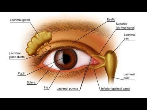صور مكونات العين , شرح لمكونات العين