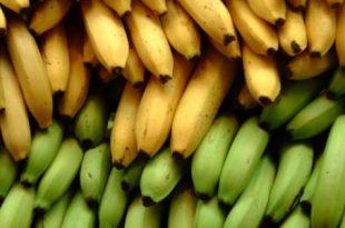 صور ماهي فوائد الموز , ما لا تعرفه عن الموز